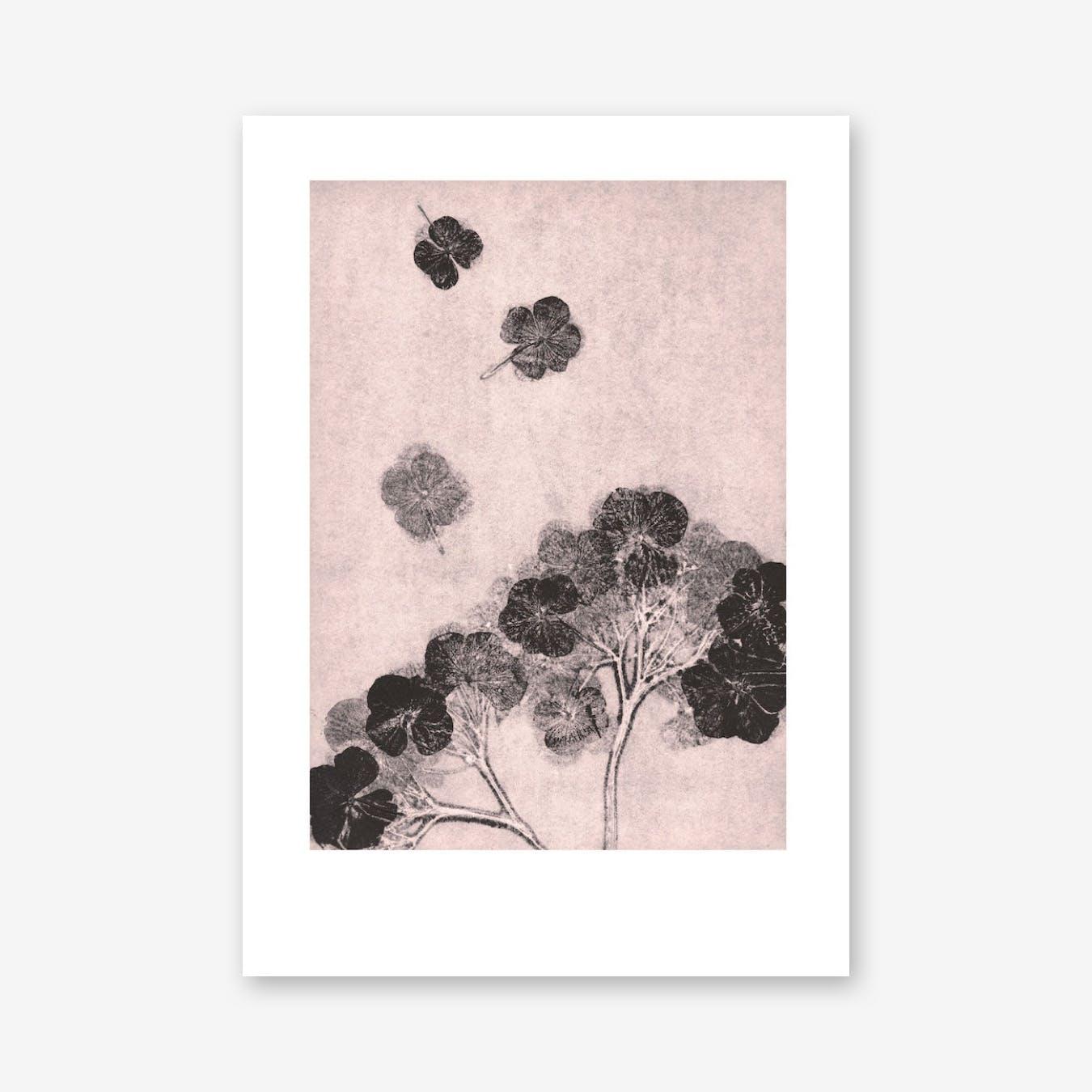 Hortensia Blush Print In 30cm x 40cm