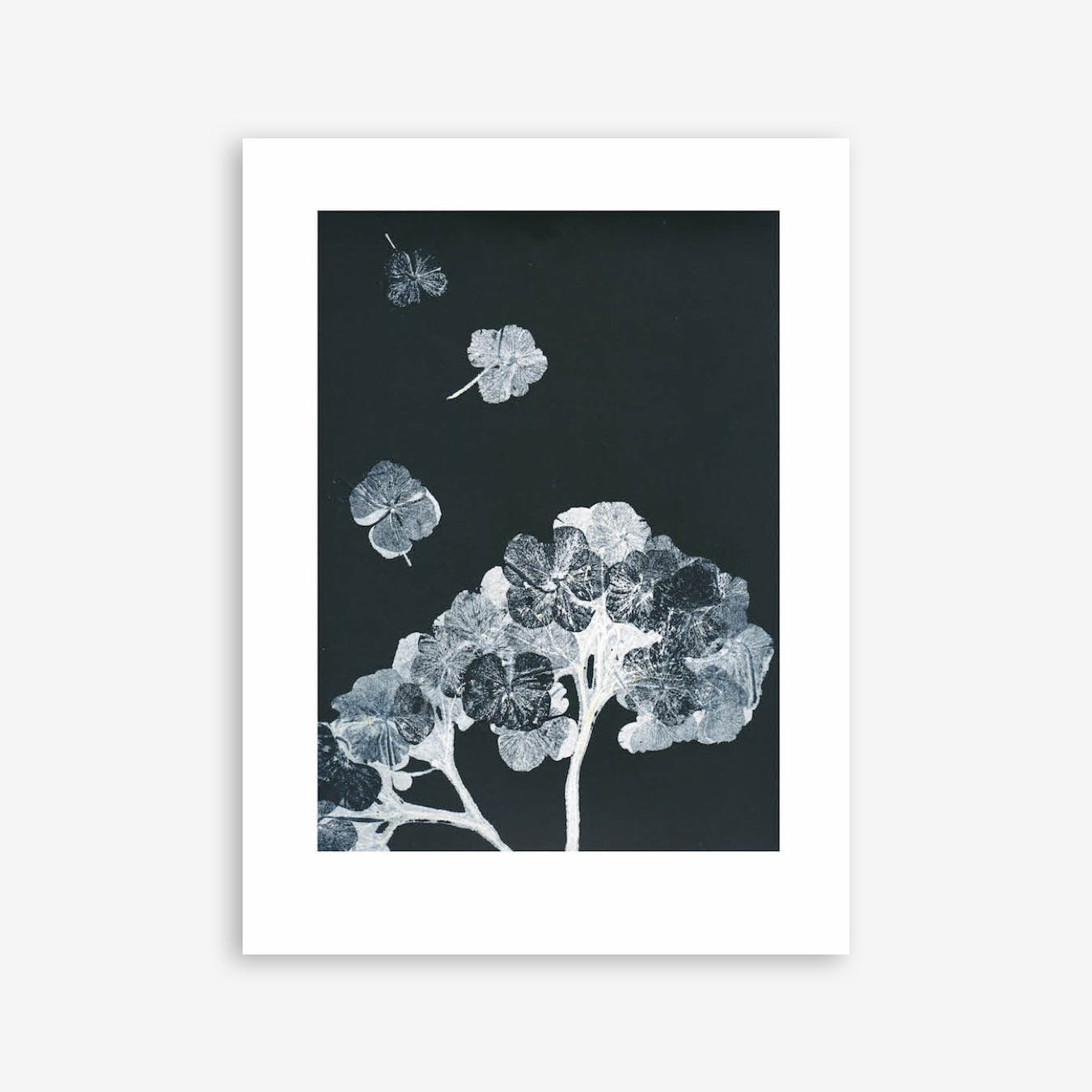 Hortensia Black Ink 4 Print In 30cm x 40cm