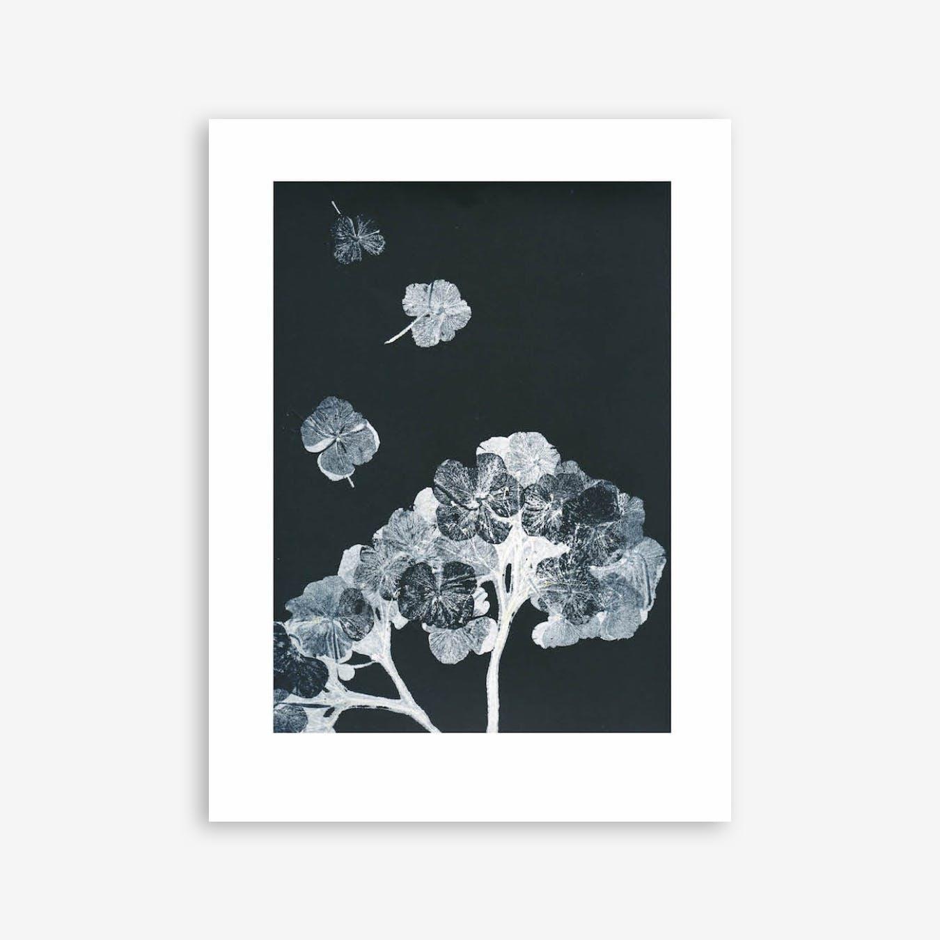 Hortensia Black Ink 4 Print In 30cm x 40cm