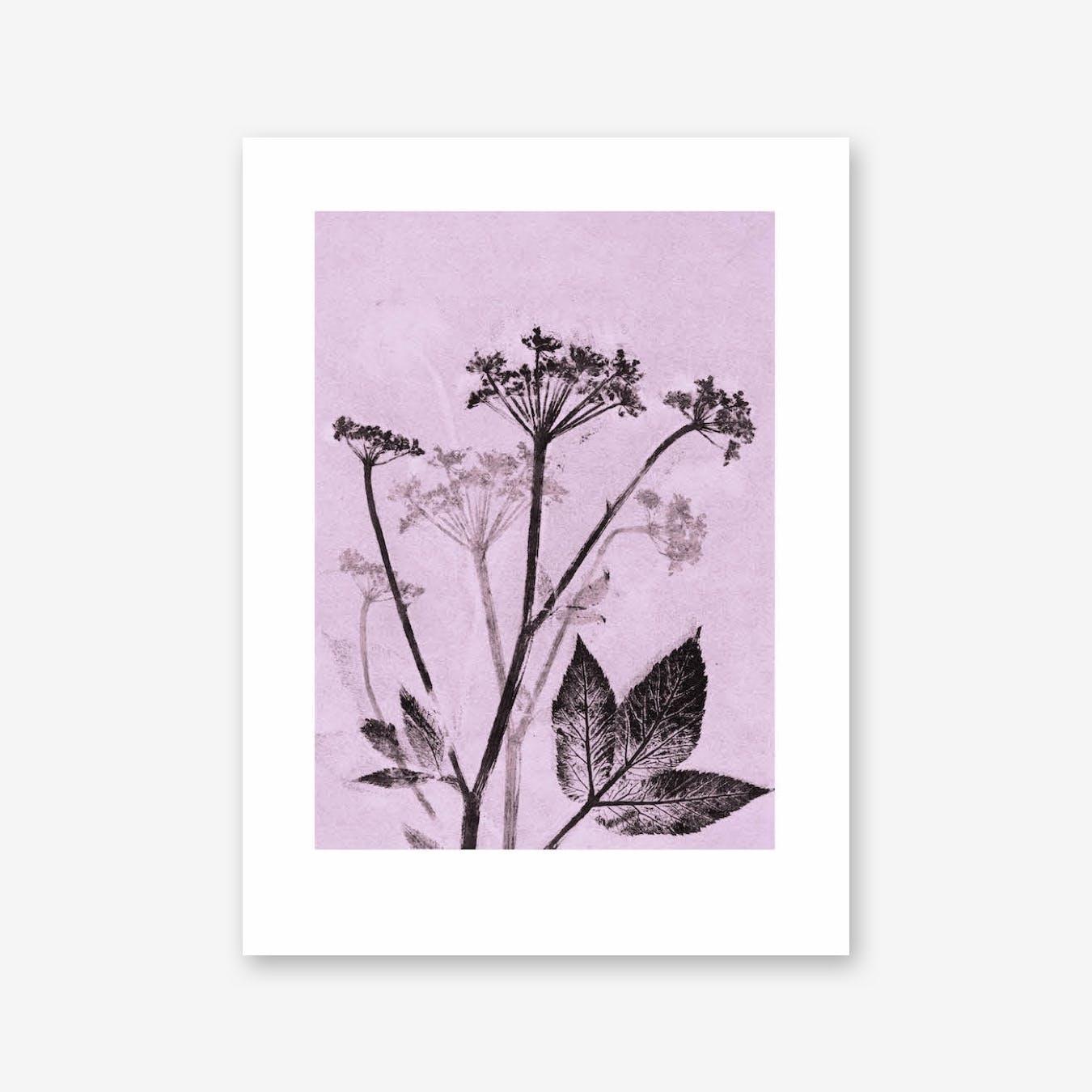Groundelder Violet Print In 30cm x 40cm