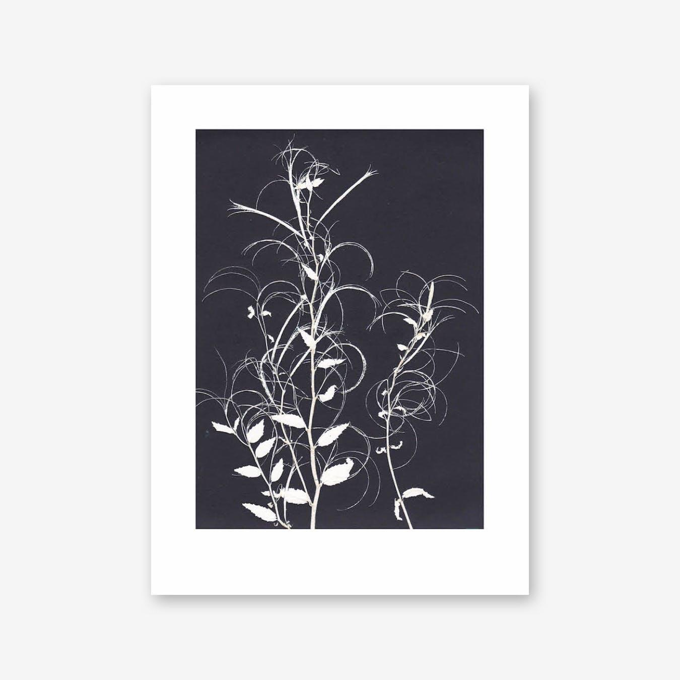 Willow Herb Black Print In 30cm x 40cm
