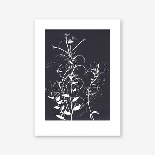 Willow Herb Black Print In 30cm x 40cm