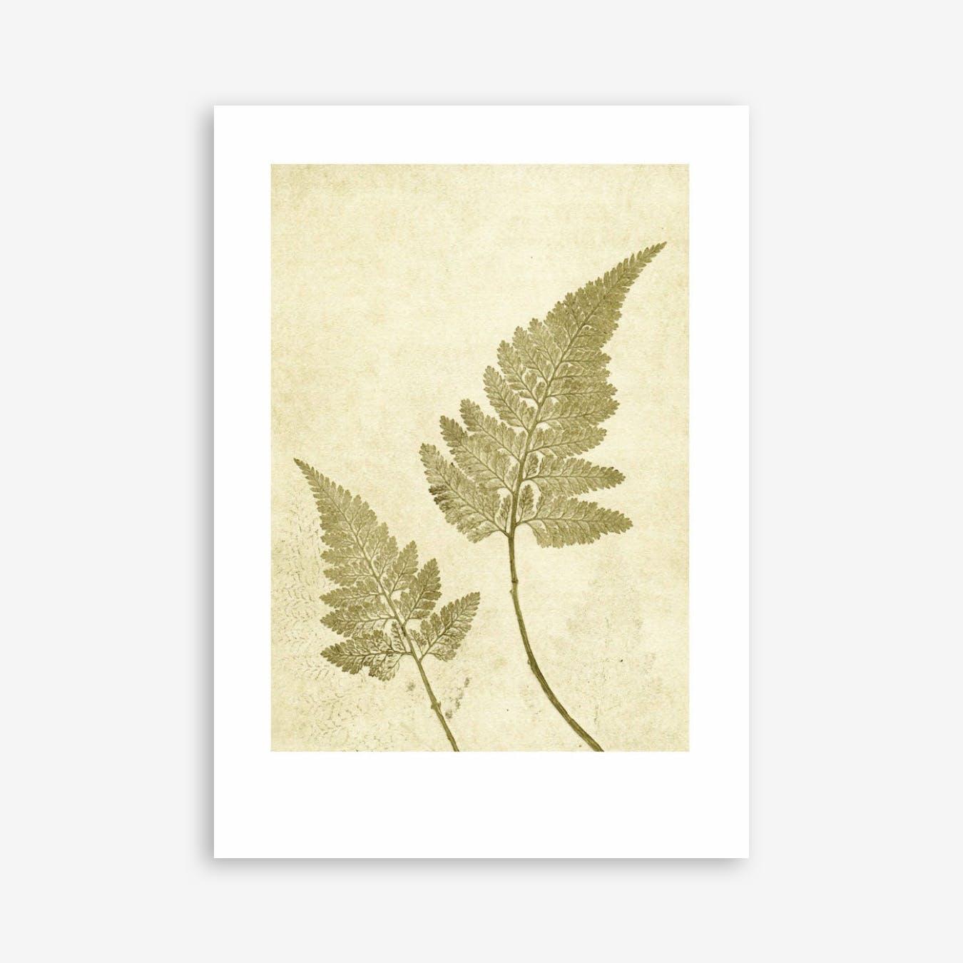 Fern Olive Print In 50cm x 70cm