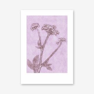 Groundelder Violet Art Print In 50cm x 70cm