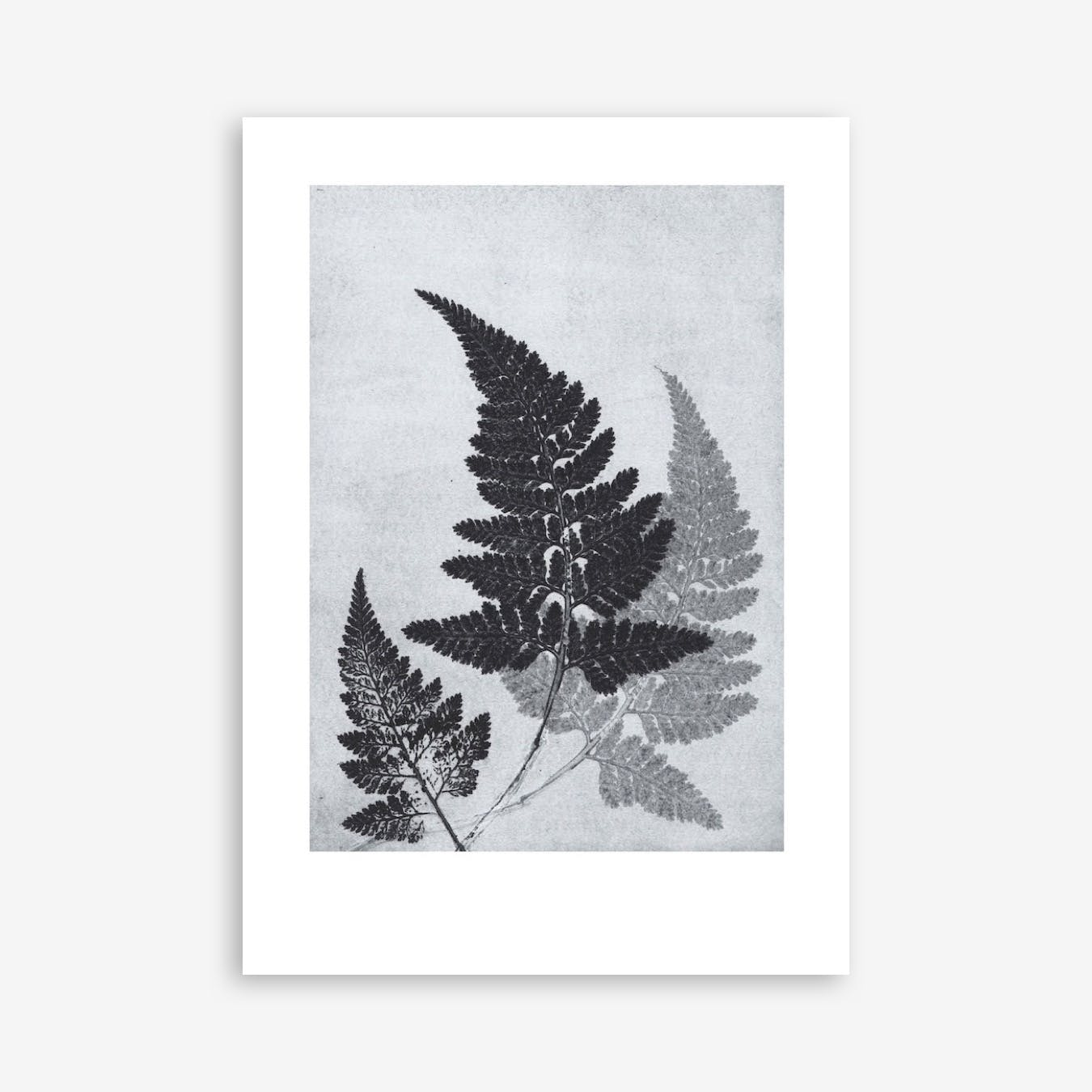 Fern Bluegrey Print In 50cm x 70cm