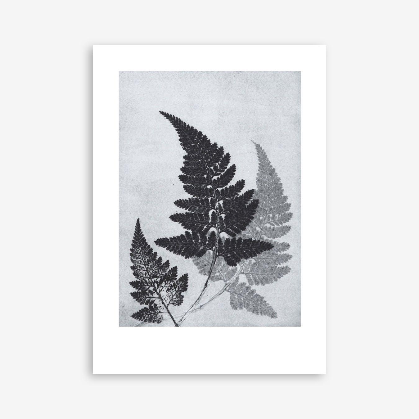 Fern Bluegrey Print In 50cm x 70cm