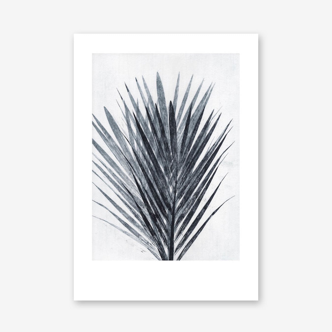 Palm Light Print In 70cm x 100cm