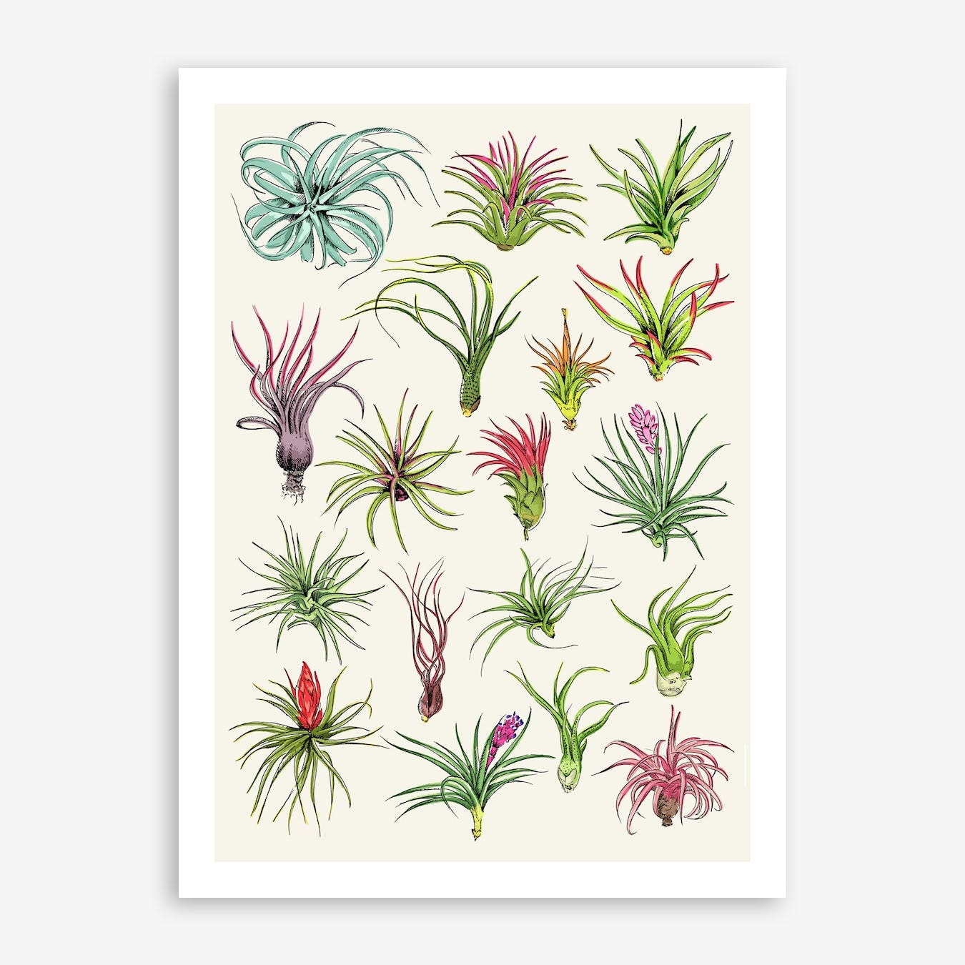 Air Plants Art Print