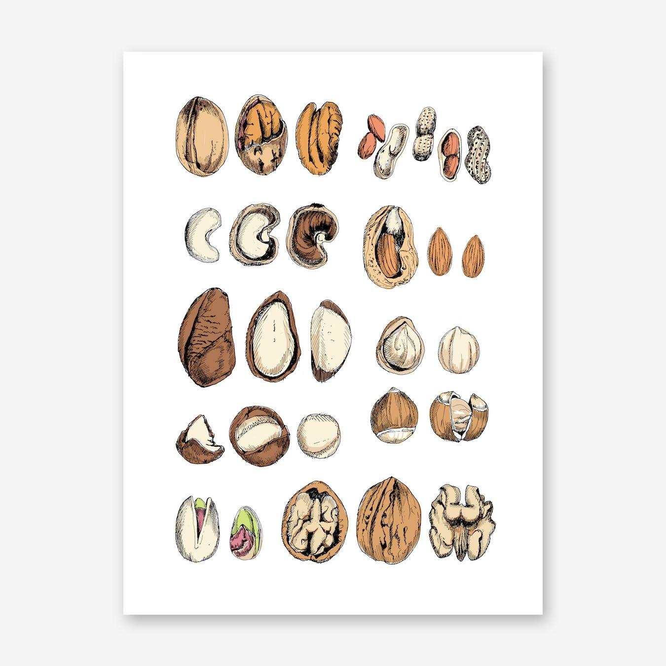 Nuts Art Print
