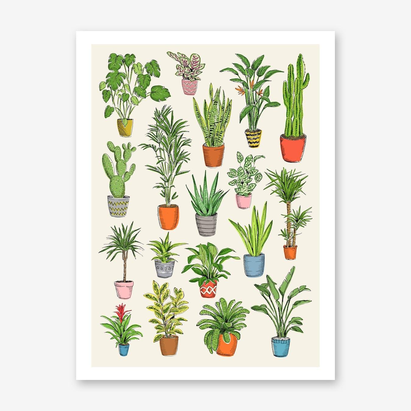 House Plants Art Print