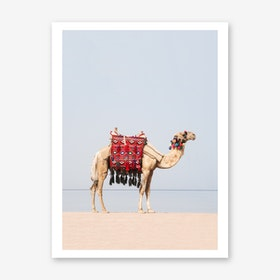 Camel in the desert Art Print