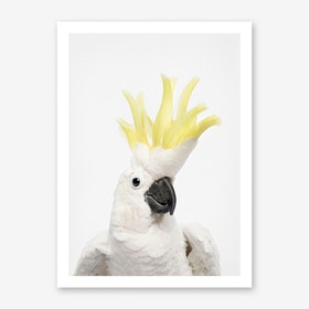 Cheeky Cockatoo Art Print