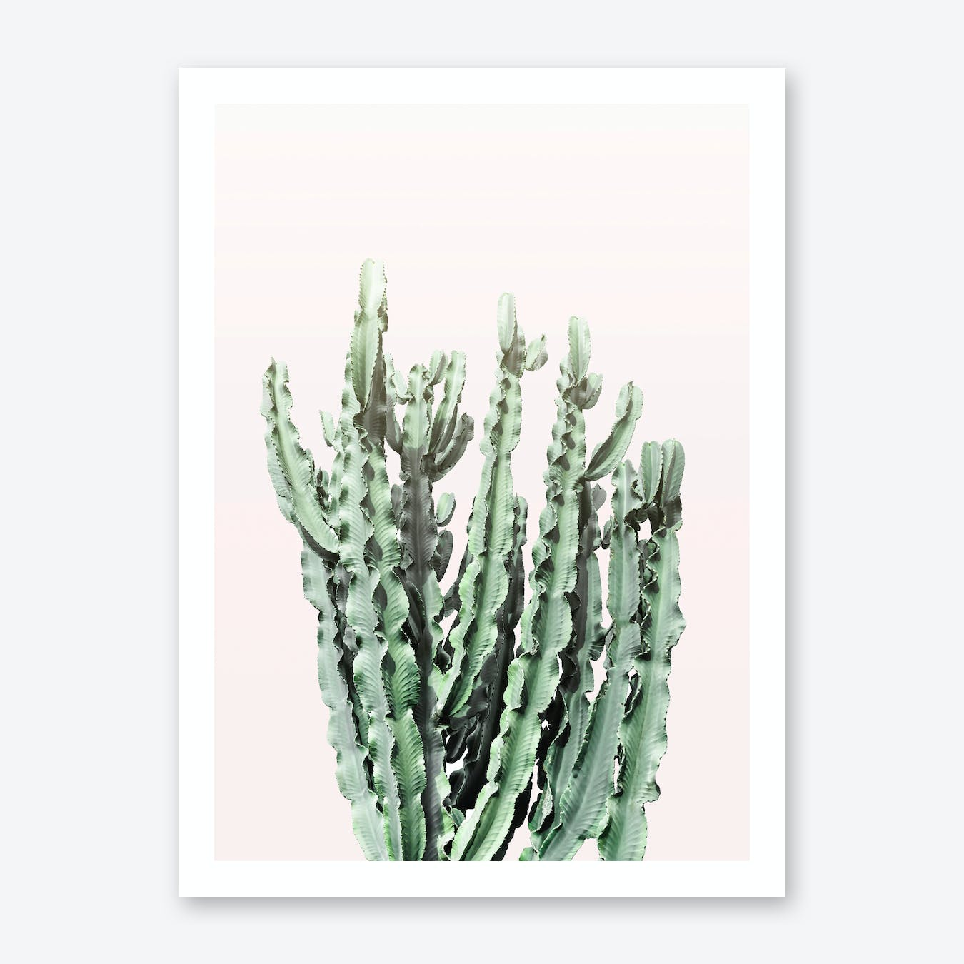 Blush Cactus
