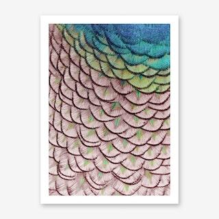 Pink Peacock Art Print