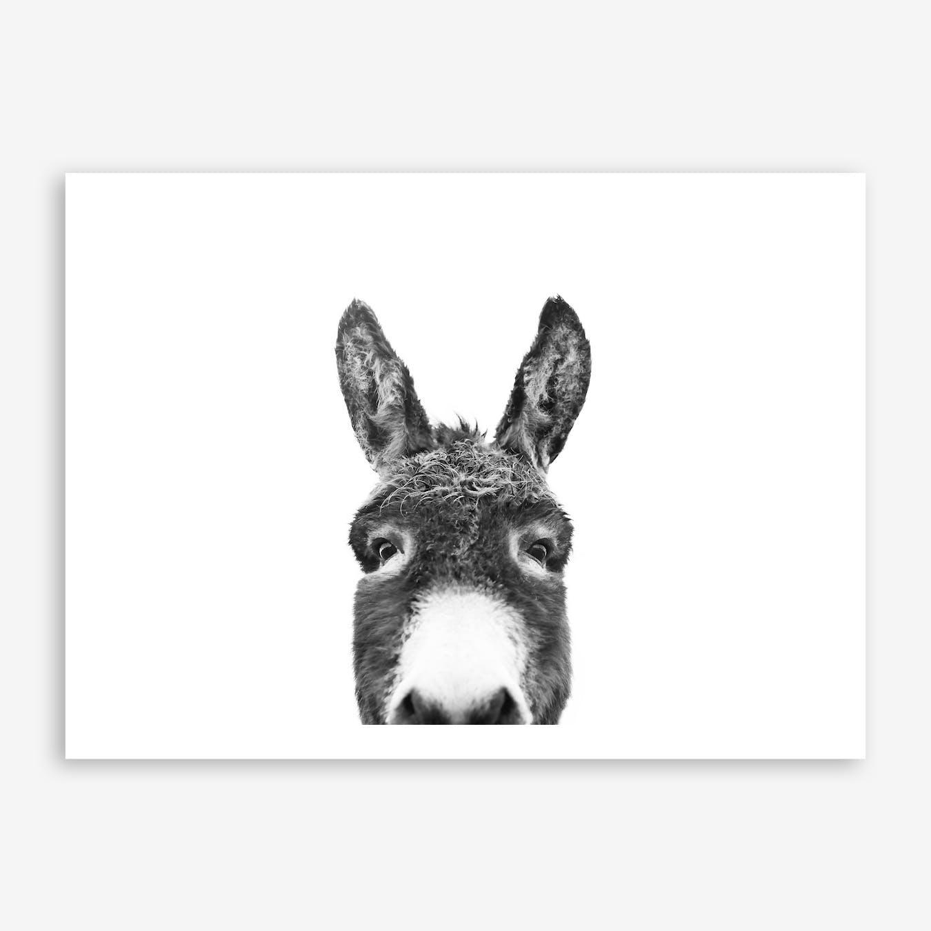 Hello Donkey