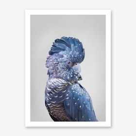 Black Cockatoo Art Print