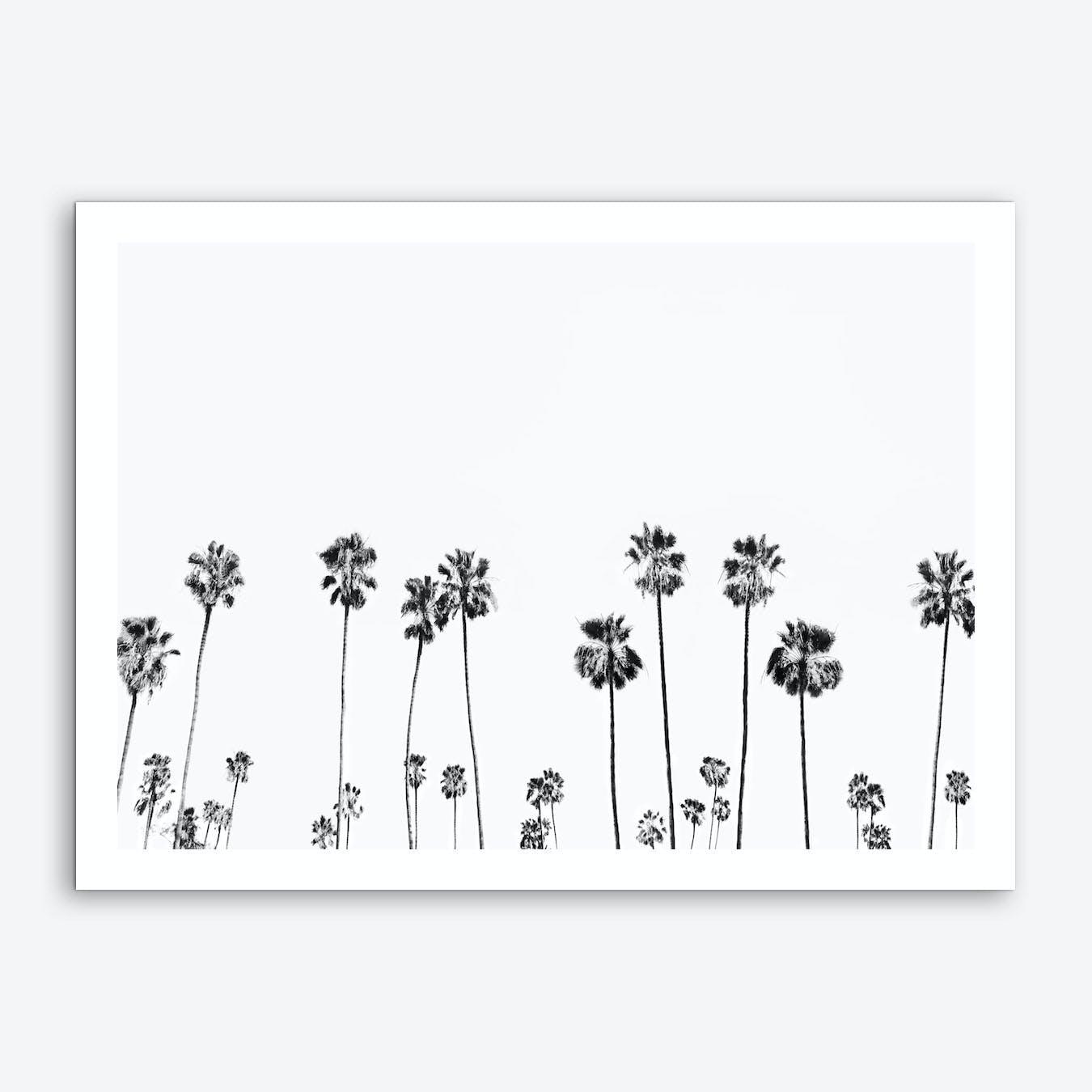 Palm Valley Art Print
