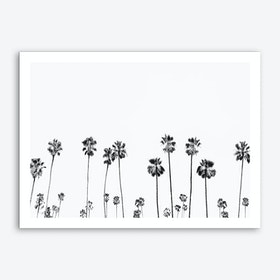 Palm Valley Art Print