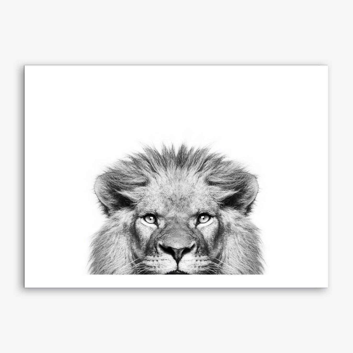Peeking Lion Art Print