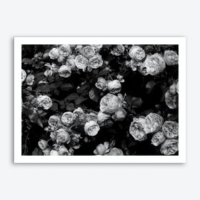 Rose Bush Art Print