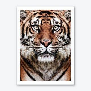 Tiger Face Art Print