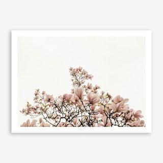December Magnolia Art Print