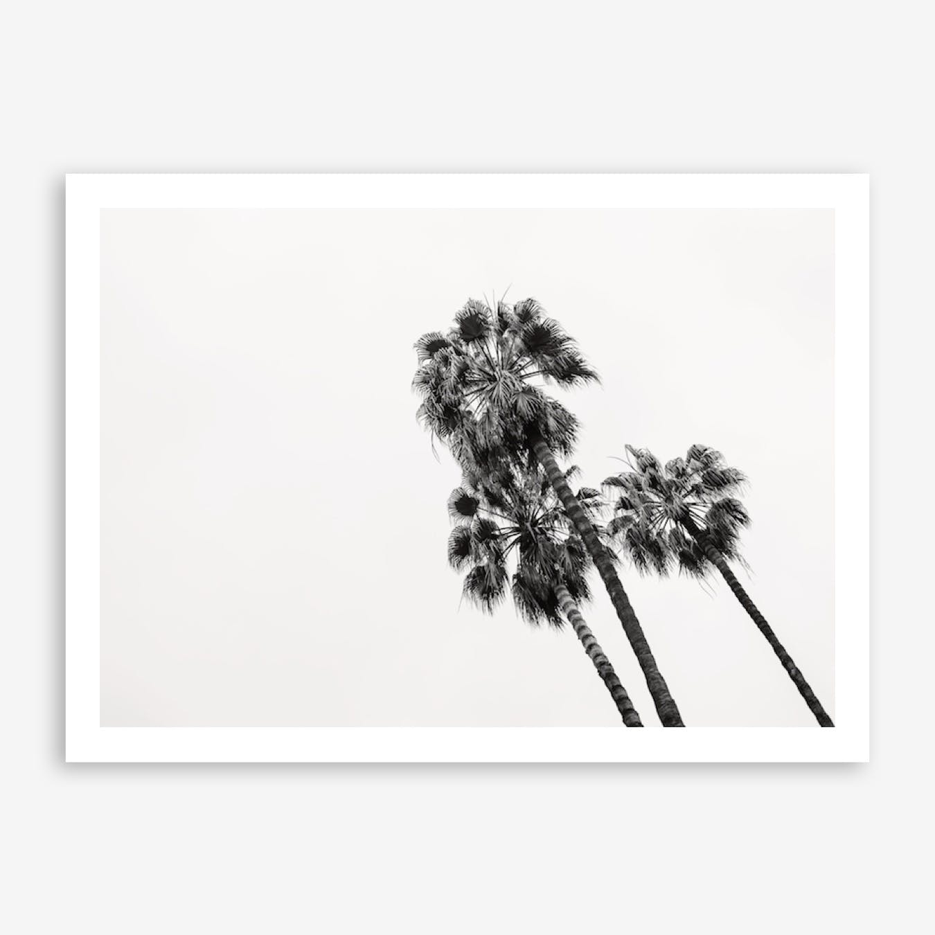 Palm Trees Barcelona