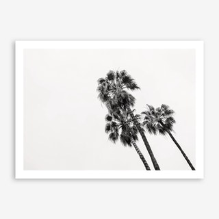 Palm Trees Barcelona Art Print