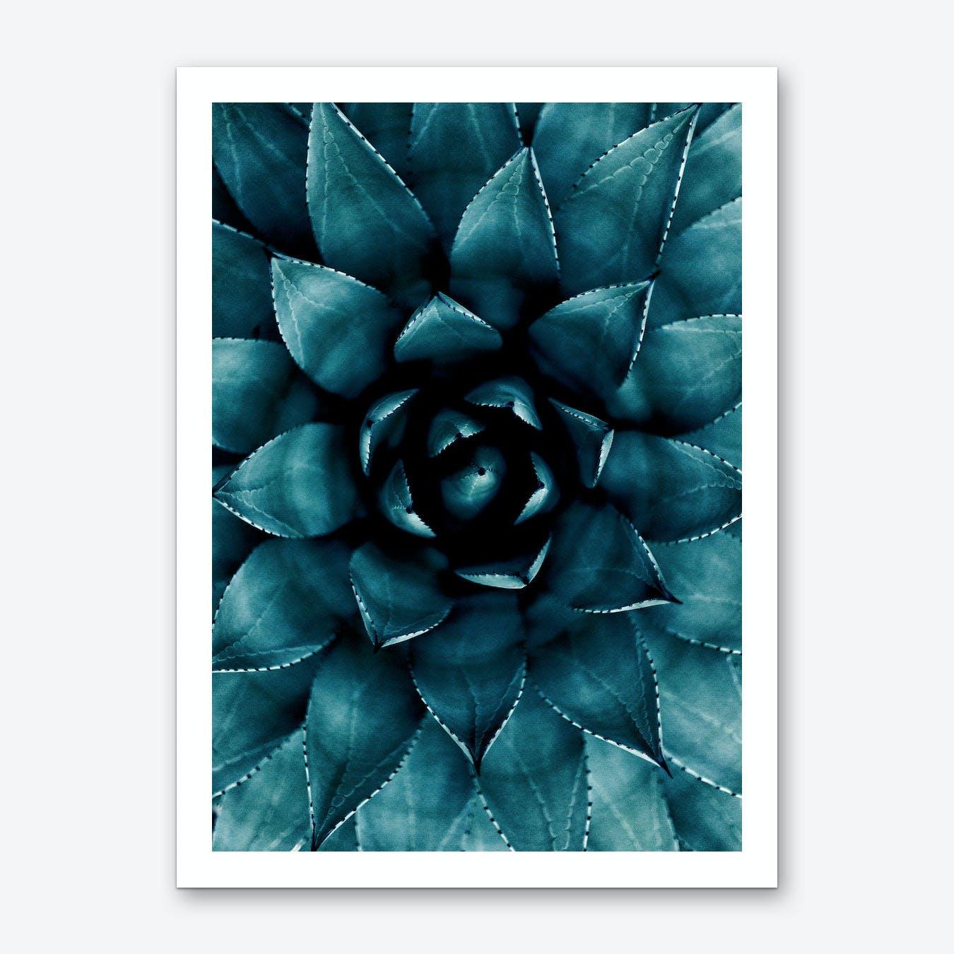 Cactus No.9 Art Print