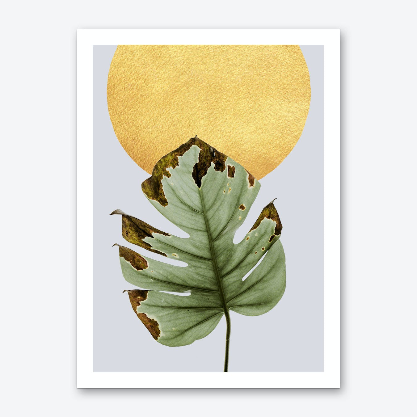 Dancing Leaf in the Sun Art Print