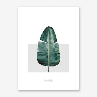 Musa Paradiciasa Art Print