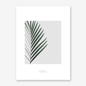 Pheonix Dactylifera Art Print