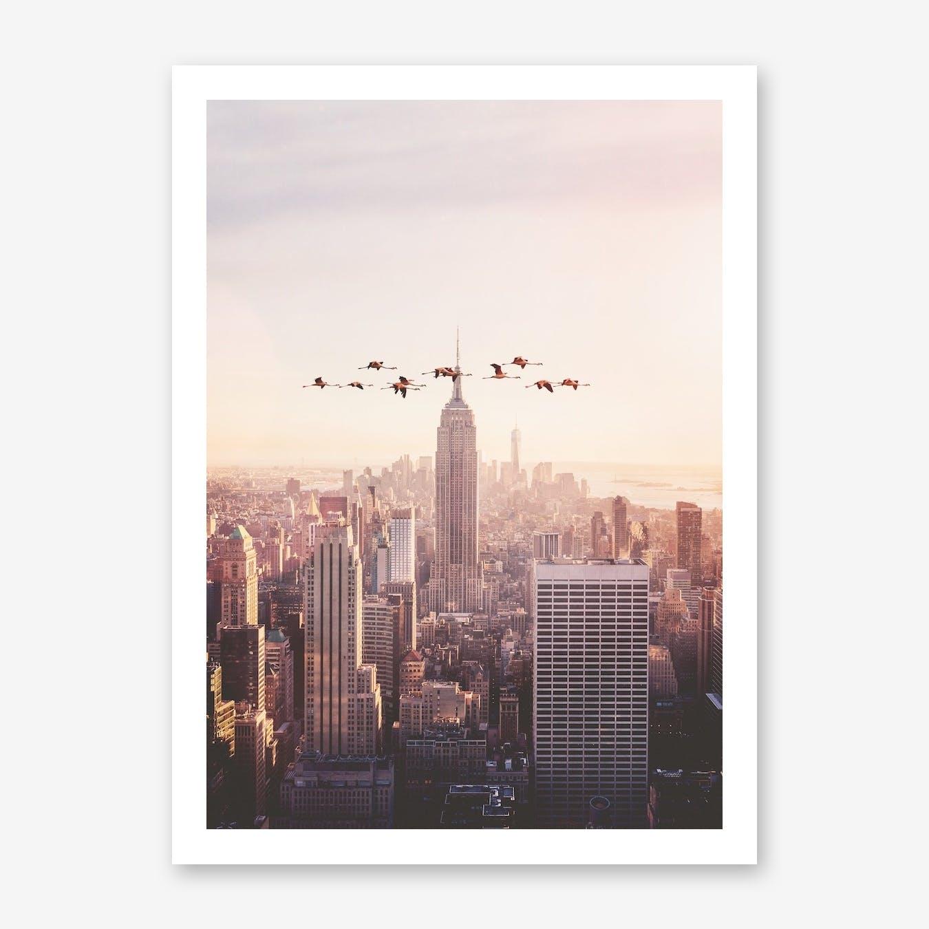 Flamingos in New York