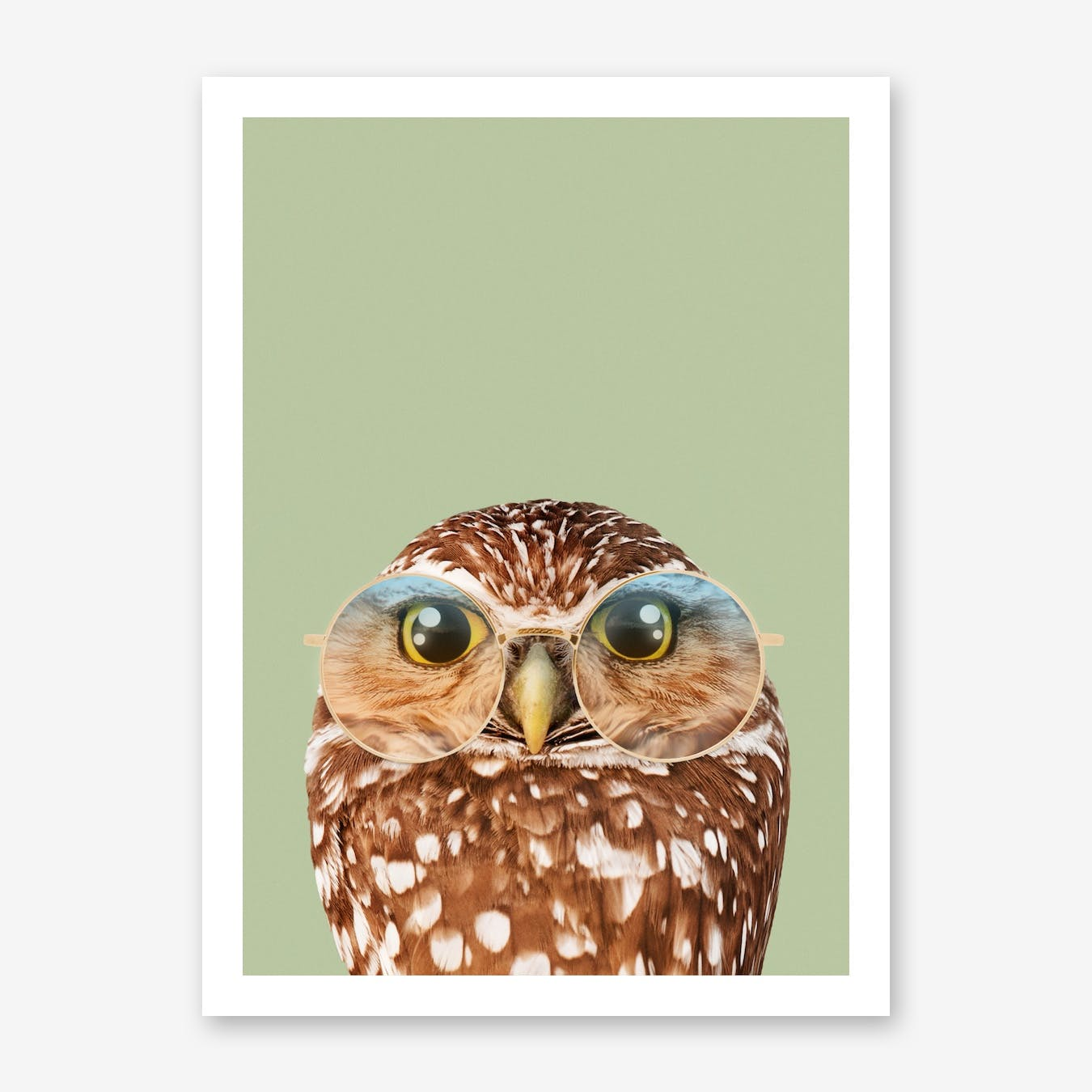 Hipster Owl