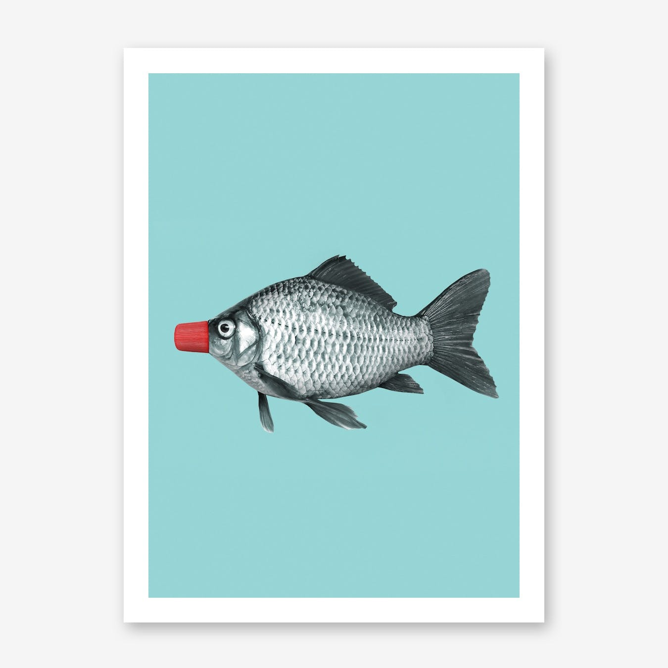 Soy Sauce Fish