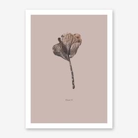 Botanico II Art Print