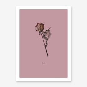 Botanico III Art Print