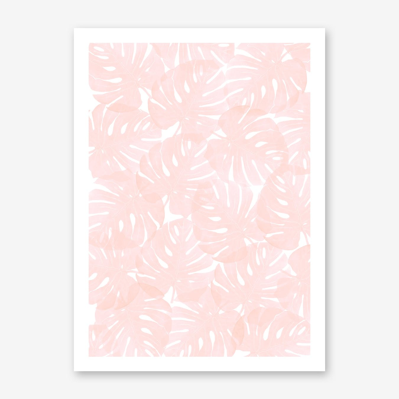 Monstera Peach Blossom