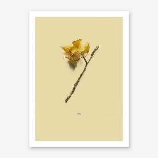 Botanico VII Art Print
