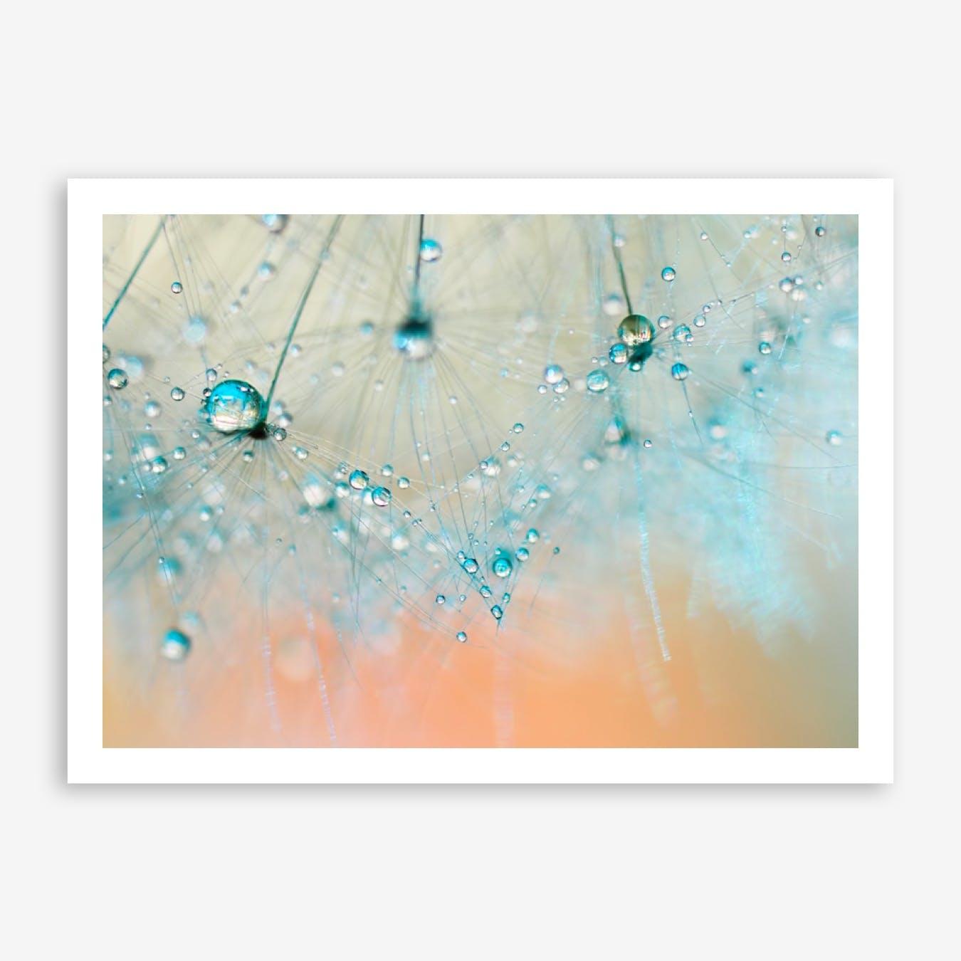 Dandelion -Droplets of Aqua