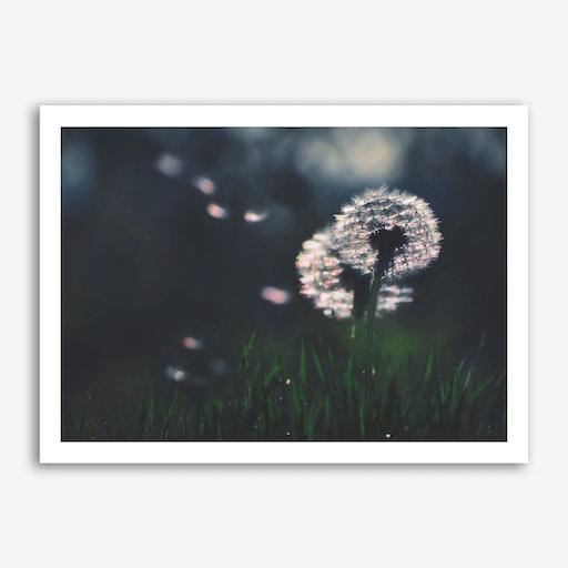 Dandelion - Make a Wish