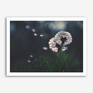 Dandelion - Make a Wish Art Print