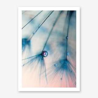 Dandelion - Droplets of Rose Pink Art Print