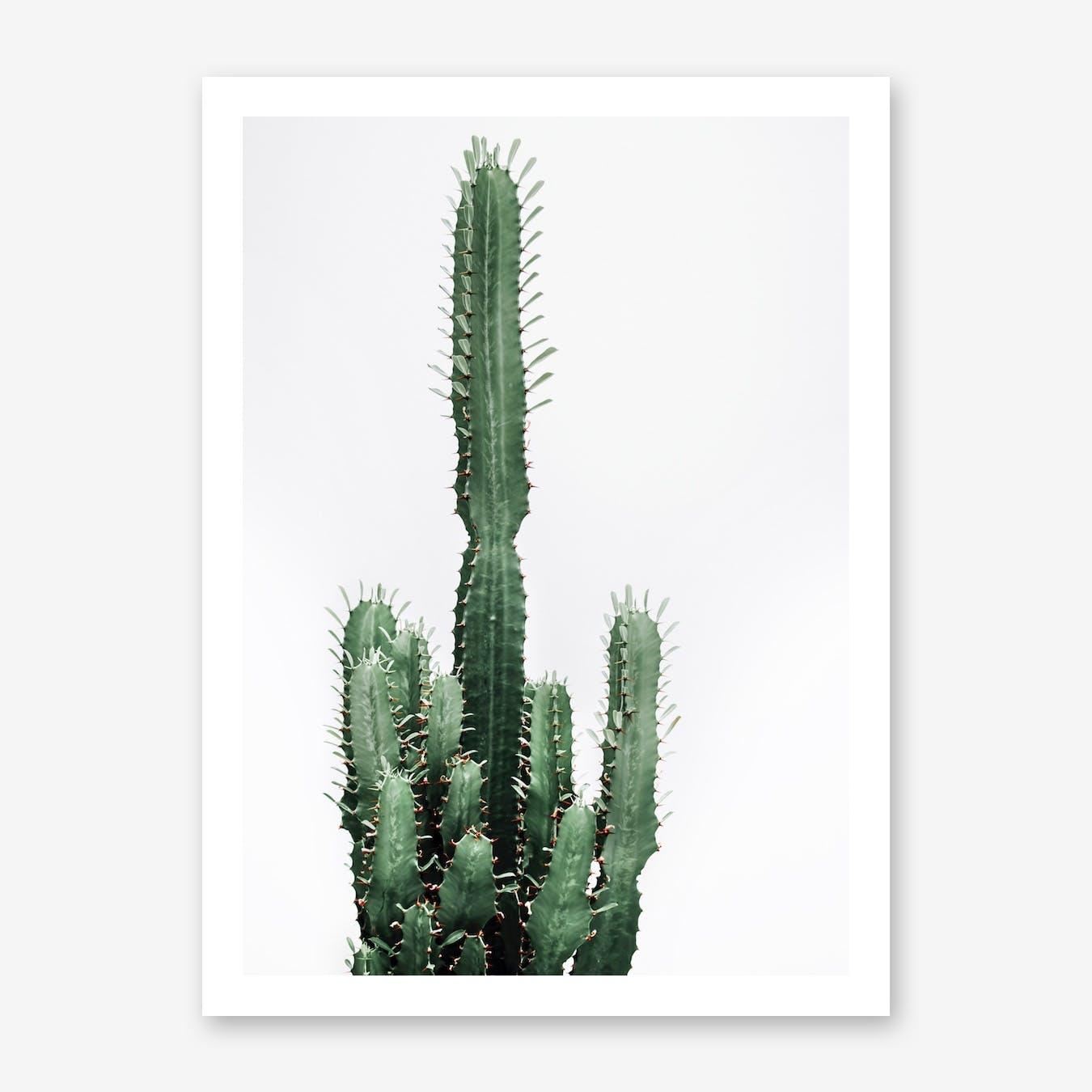 Cactus Red II
