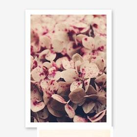 Flowers - Pink Freckles Art Print