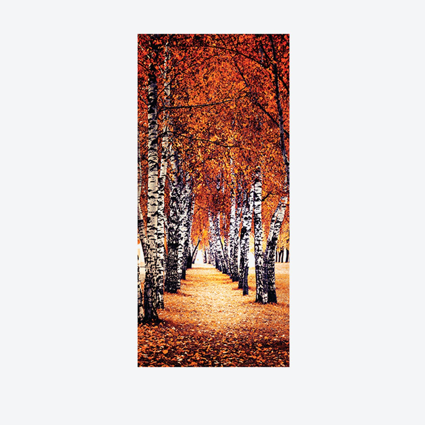 Autumn Birch Tree Path Door Mural