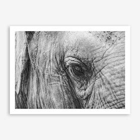 Elephant's Eye Art Print
