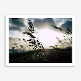 Reeds on the Beach 1 Art Print
