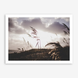 Reeds on the Beach 2 Art Print