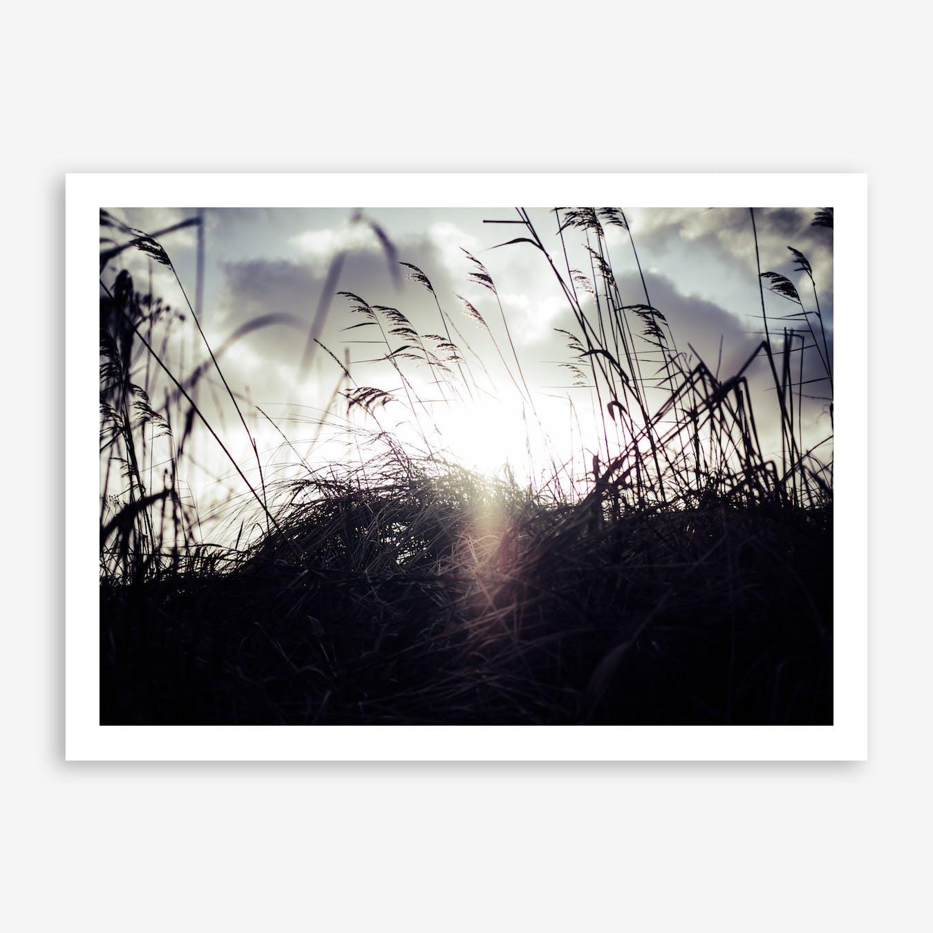 Reeds on the Beach 3